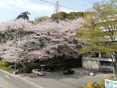 2011-4-komakiyama-6.jpg