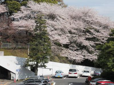 2011-4-komakiyama-7.jpg